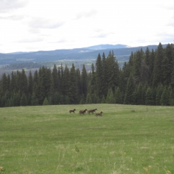 Wild horses at the Meadow